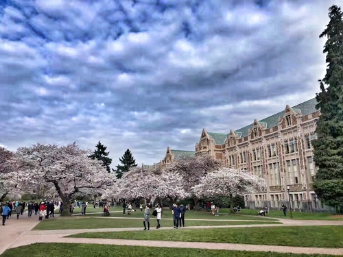 Founded in 1861, the University of Washington is a famous public research universities in the world, and it is one of the public ivy. Ranked the 10th in World University of 2018 US News and ranked (ARWU) the 13th in World University academic 2017. The campus is on the lakeside of Washington lake. The bright cherry blossoms on campus in every spring. For 157 years, the University of Washington has cultivated countless political elites, business giants and scientific giants, and in total there are 15 Nobel laureates.